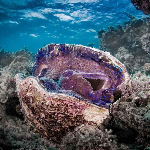 Hình ảnh đẹp về dải san hô Great Barrier