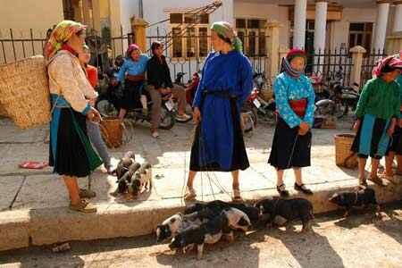 Chợ gia súc ở cực bắc Tổ quốc