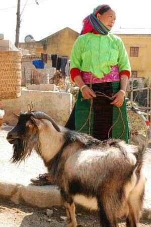 Sotaydulich Sotay Dulich Khampha Kham Pha Bui Cho gia suc o cuc bac To Quoc