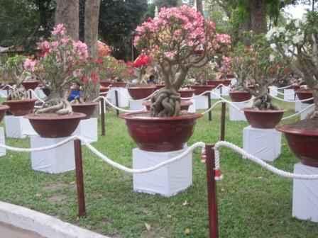 Sotaydulich Sotay Dulich Khampha Kham Pha Bui Chum anh hoi hoa xuan tai Tao Dan