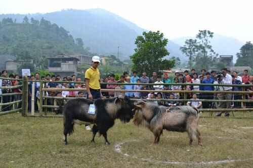 KinhNghiemDuLich.org  Doc dao thi choi de o Hoang Su Phi