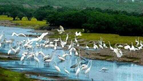 KinhNghiemDuLich.org  Hanh trinh den cac khu Ramsar  o Viet Nam