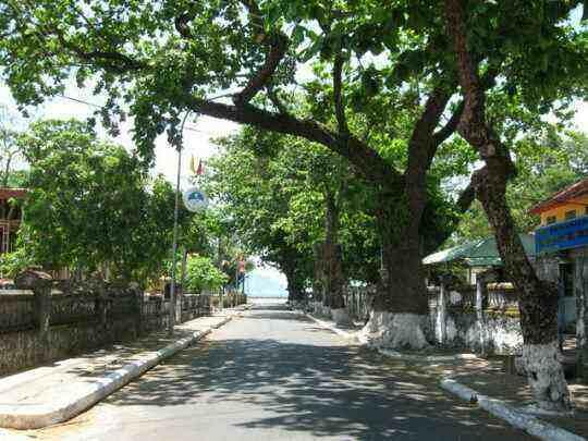 Description: Du lịch Côn Đảo - Những hàng cây bàng râm mát khắp các con đường nhỏ lớn trên đảo
