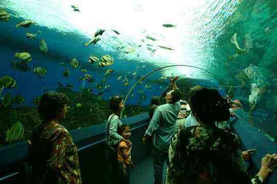 Thế giới đại dương của Singapore