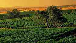 Thung lũng Barossa